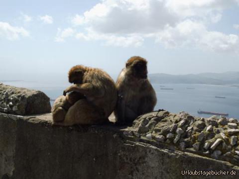 Chefs des Affenfelsens: Chefs des Affenfelsens