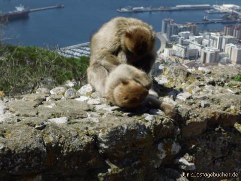 Gibraltar von oben : Gibraltar von oben