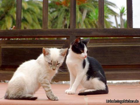 Katzenpaar: Katzenpaar