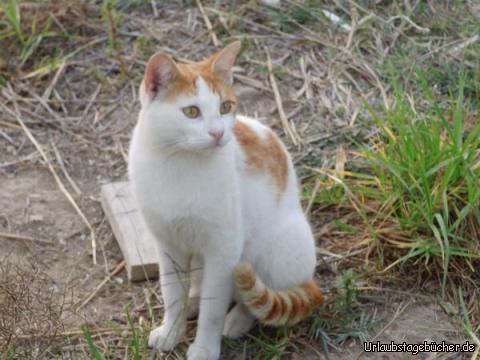 Katzen auf Kos: Katzen auf Kos