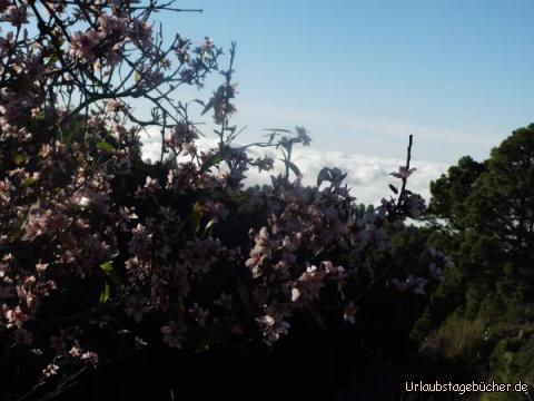 Traumhafte Mandelblüte auf La Palma: Traumhafte Mandelblüte auf La Palma
