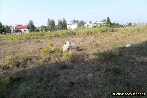 griechische Kühe machen µ: griechische Kühe machen µ